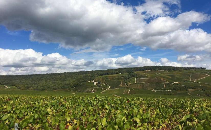 Becoming a Champagne Expert in Epernay,France